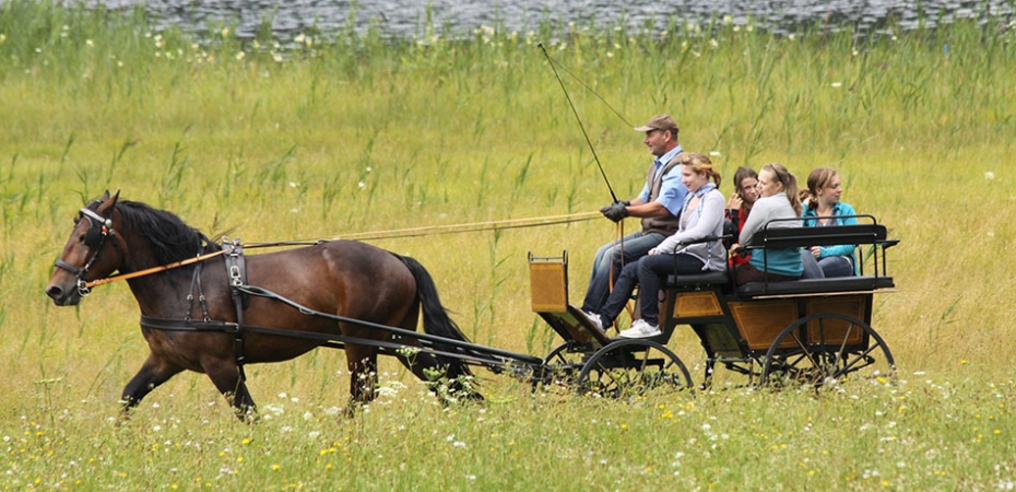 Pferdewagen, PS-PR Schneider, Foto-Journalist, Pferdesport, Pferdezucht, Reportagen, Marketingcoach, Multimedia-Coach